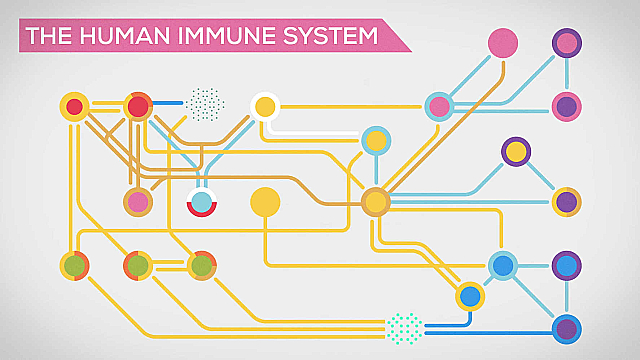 Watch Full Movie - The Immune System Explained: Bacteria Infection - Watch Trailer